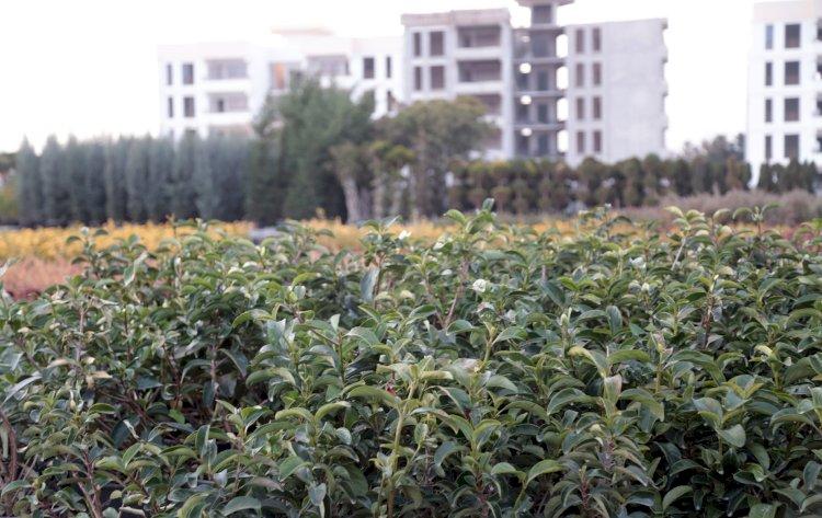 Eyyübiye'deki parklara farklı türlerde yeni ağaçlar dikilecek